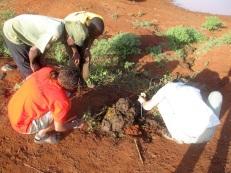 4-Njambi-first-crop-raid-4