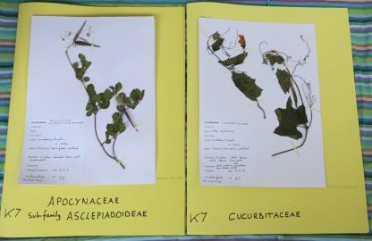 POLLINATION-Herbarium-photos