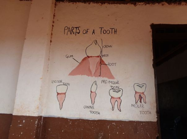 parts-of-a-tooth