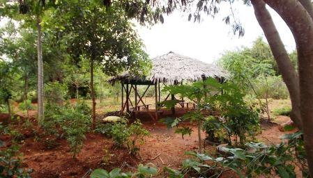 Kenya-200202-1237-024